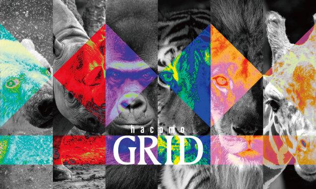 hacomo GRIDに絶滅危惧種ラインナップ登場!2021年7月27日発売!